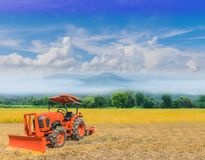 Miękki ostrości zieleni irlandczyka ryż pole z pięknym niebem i clo obraz royalty free