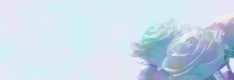 Miękki romantyczny róża sztandar Fotografia Stock