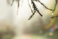 Miękki tło wizerunek podeszczowe wodne kropelki spada daleko liście obrazy stock