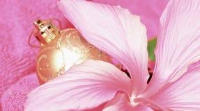 Miękkich części Różowi boże narodzenia w Lipu, poślubnika kwiacie i złocistej błyskotliwości dekoraci balowym tle, Zdjęcie Stock