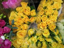 Miękkie delikatne żółte róże obraz royalty free