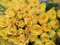 Miękkie delikatne żółte róże zdjęcie royalty free