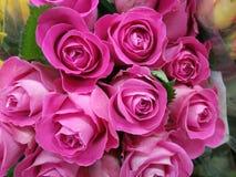 Miękkie delikatne zmrok menchii róże fotografia royalty free