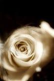 miękkie różaniec Fotografia Stock
