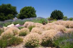 Miękkie trawy Kalifornia w lecie Fotografia Royalty Free