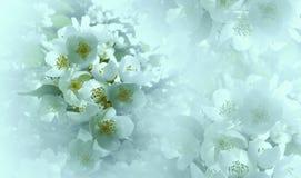 Miękkiego światła turkusowy kwiecisty tło Kwiaty wiśnia na białym halftone tle Zakończenie 2007 pozdrowienia karty szczęśliwych n Obrazy Royalty Free