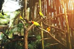 Miękkiego i jaskrawego światła słonecznego portret egzotyczny papuzi żółty pomarańczowy kolor na słonecznym dniu w Tajlandia zdjęcie stock