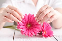 Miękkiej części czuła ochrona dla kobieta krytycznych dni, ginekologiczny miesiączka cykl, różowy gerbera w ręce zdjęcia stock