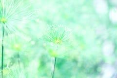 Miękkiej części natury abstrakta zielony tło Zdjęcia Royalty Free