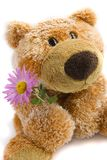 miękkiej części niedźwiadkowa zabawka Fotografia Royalty Free