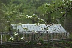 Miękkiej części zieleni liście zdjęcia stock