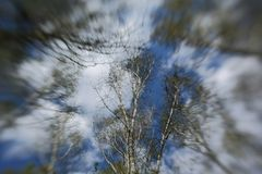 Miękkiej części zieleni liście zdjęcie stock