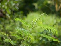 Miękkiej części zieleni szczyty Zdjęcia Royalty Free