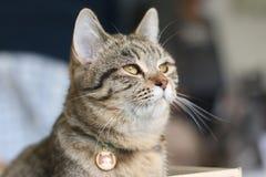 Miękkiej ostrości uroczy kot Zdjęcia Royalty Free