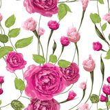 Miękkość menchii róża kwitnie z liśćmi na białym tle ilustracja wektor