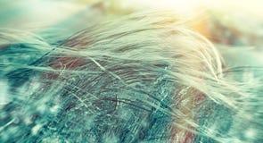 Miękkości wysoka trawa w zimie zaświecał ranku światłem słonecznym Fotografia Royalty Free