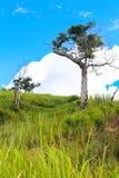Mięsień drzewo zdjęcie royalty free