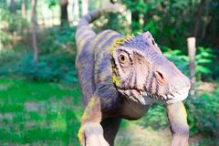 Mięsożerny dinosaur z żółtymi oczami przygotowywa skakać na swój zdobyczu Opinia w imieniu ofiary fotografia royalty free