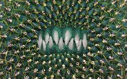 Mięsożerny kaktus z ostrymi zębami fotografia stock