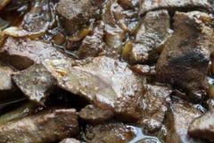 Mięso smażący jest świeży soczysty Obraz Royalty Free