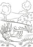Miła kaczka i mały śliczny kaczątko pływamy na stawie Obrazy Royalty Free