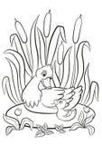 Miła kaczka i mały śliczny kaczątko pływamy na stawie i my uśmiechamy się Obrazy Royalty Free