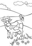 Miła uśmiechnięta krowy pozycja na polu Zdjęcia Royalty Free