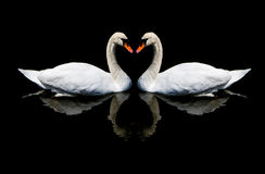 Miłość łabędź Obrazy Royalty Free
