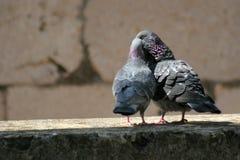 miłość Zdjęcie Stock