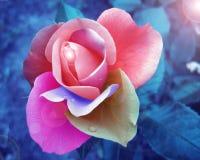 Miłość abstrakt Fotografia Royalty Free