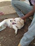 Miłość dla oswojonych zwierząt zdjęcie stock