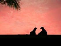Miłość gołąbki Zdjęcia Royalty Free