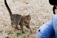 miłość kota kierowa ilustracyjna miłość Fotografia Royalty Free