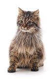 miłość kota kierowa ilustracyjna miłość Obrazy Royalty Free