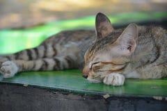 Miłość koty Zdjęcie Royalty Free
