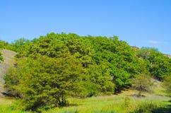 miłość pardwy piosenka dziki drewna natury Obraz Stock