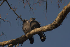 miłość powietrza Zdjęcie Royalty Free