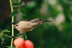 Miłość ptak fotografia stock
