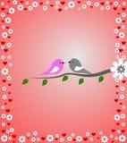 Miłość ptaki Fotografia Royalty Free