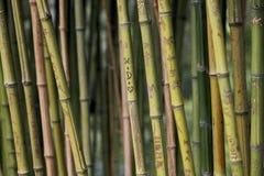 Miłość rytownictwa na bambusach obrazy royalty free