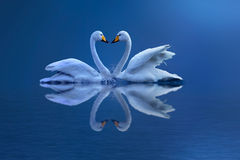 miłość s Zdjęcie Royalty Free