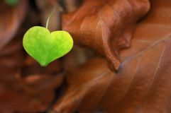 miłość wszędzie Zdjęcie Stock