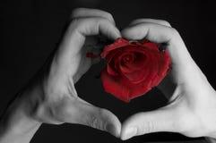 miłość znaczy Fotografia Stock
