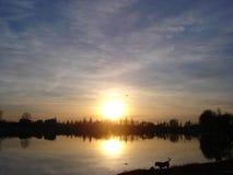 miłość zwierząt powietrza zdjęcie royalty free