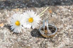 Miłości ślubny tło z złocistymi pierścionkami Obraz Royalty Free