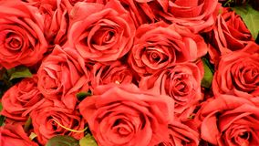 miłości czerwień wzrastał Fotografia Royalty Free