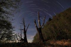 Miłości drzewa gwiazdy ślad Taiwan Fotografia Royalty Free