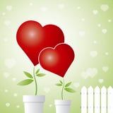miłości drzewo Obraz Stock