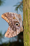 miłości motylia sowa Obraz Royalty Free