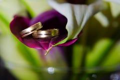 Miłości na zawsze - obrączka ślubna Zdjęcie Stock